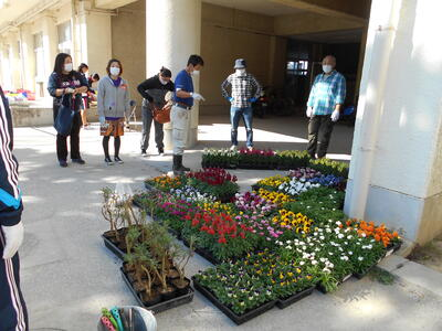沢山の花の苗