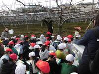 梨畑見学1