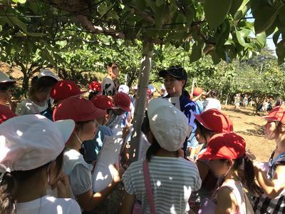 梨畑の見学