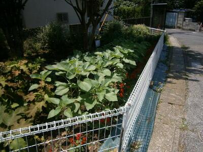 7月2日フェンスの高さを超えました