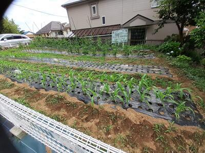 6月12日農耕班の畑