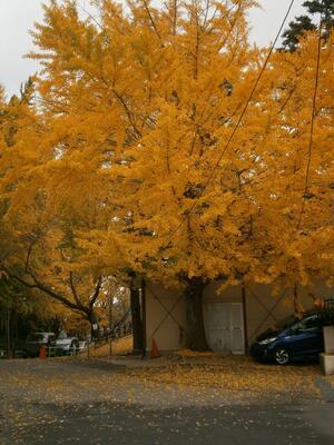 色ついた葉っぱが散って
