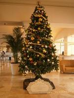 ロビーで輝くクリスマスツリー